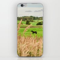 Black horse iPhone & iPod Skin