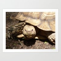 Tortoise 2015 Art Print