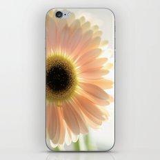 Salmon Gerbera iPhone & iPod Skin