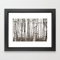 Birchwood Framed Art Print