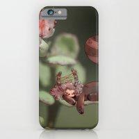 Belladonna iPhone 6 Slim Case