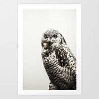 Snowy Owl | Fig. 02 Art Print