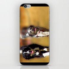 two dogs iPhone & iPod Skin