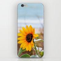 Sunflower near ocean iPhone & iPod Skin