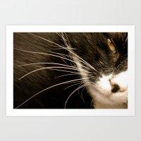 whiskers Art Print