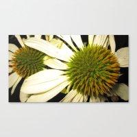 2 flower  Canvas Print