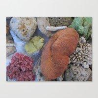 Coral Sea Treasures Canvas Print
