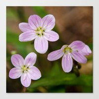 Trio of pink Canvas Print