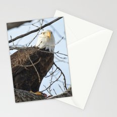 Eagles of Wisconsin 1 - A Wildlife Art Print Stationery Cards