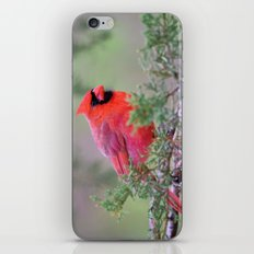 Spring Cardinal iPhone & iPod Skin