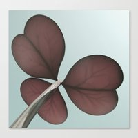 three leaf clover Canvas Print