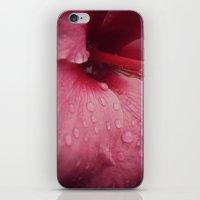 Tender Pink iPhone & iPod Skin