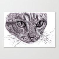 Cats eyes... Canvas Print
