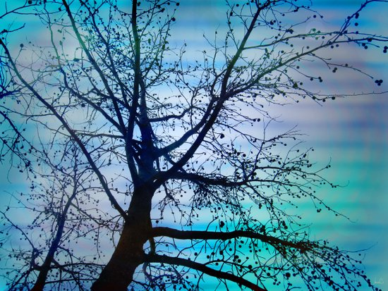 tree of wishes Canvas Print