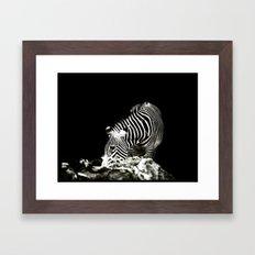Zebra  Framed Art Print