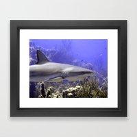 Shark Swimming Past Framed Art Print