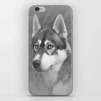 Siberian Husky iPhone & iPod Skin