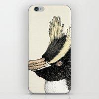Erect Crested Penguin iPhone & iPod Skin