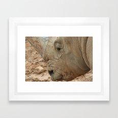 Israeli Rhino Framed Art Print