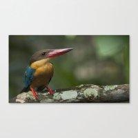 Stork Bill Canvas Print