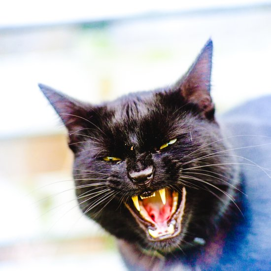 Angry black cat Art Print