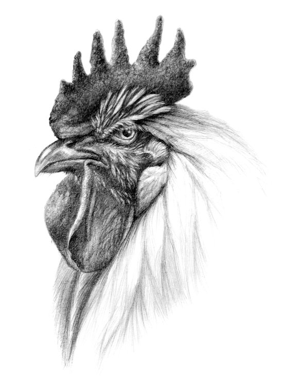 The Rooster SK065 Art Print