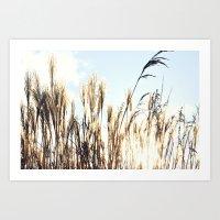 Sun Setting On Reeds Art Print