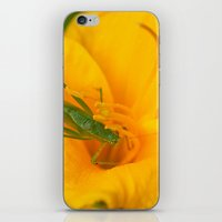 Summer Visitor iPhone & iPod Skin