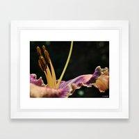 Day Lily at Dawn Framed Art Print