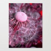 dandelion macro II Canvas Print