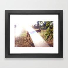 summer horse Framed Art Print