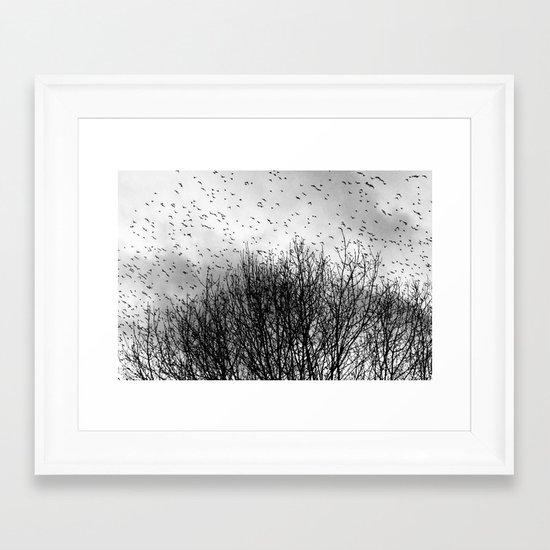 Starlings Framed Art Print