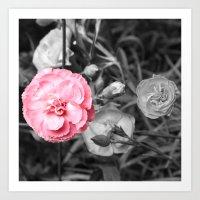 Single Pink Carnation Art Print
