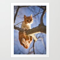 Orange Cat And The Blue … Art Print