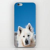 White Husky iPhone & iPod Skin