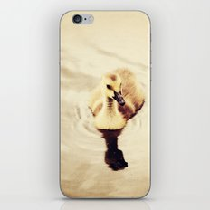Baby Canadian Goose iPhone & iPod Skin