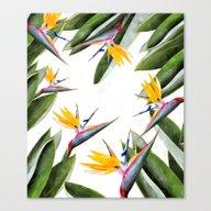 Bird Of Paradise #societ… Canvas Print