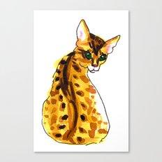 bengal kitten Canvas Print