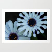 Purple And White Art Print