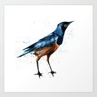 African Starling Art Print