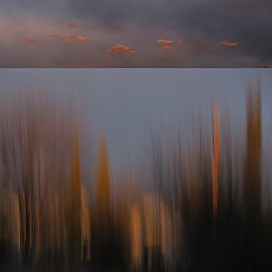 Dusk Fly By Canvas Print