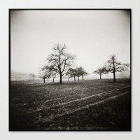 { skeleton trees } Canvas Print