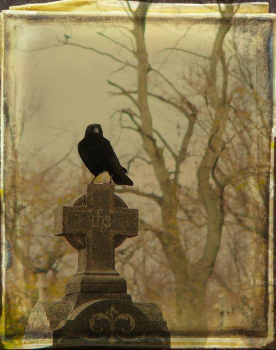 Pondering Crow Art Print
