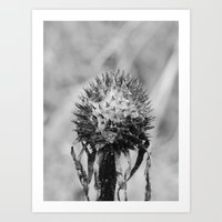 Dead Cone Flower 5 Art Print