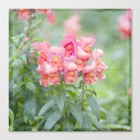 Spring Pink Flowers Canvas Print