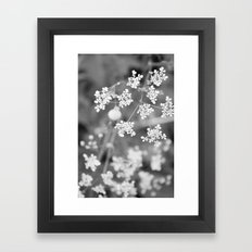 Queen Anne's Lace Wildflowers Framed Art Print