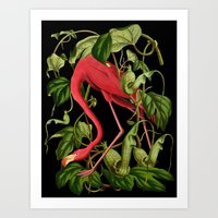 Flamingo Black Art Print