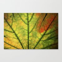 Fall Leaf II Canvas Print