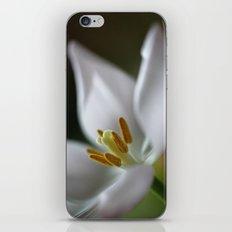 Tulip Beauty iPhone & iPod Skin