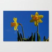 Two Daffodils Canvas Print